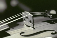 Fenomen prywatnych szkół muzycznych