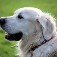 Zadbaj o czystość z pojemnikami na psie odchody